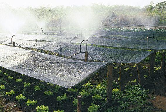 Umweltschützende Landwirtschaft nachhaltig förder, CAPA Brasilien