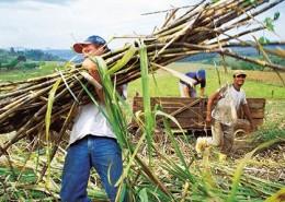 Nachhaltig umweltschützende Landwirtschaft betreiben in Brasilien