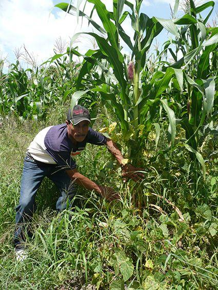 Arbeit auf dem Feld, Honduras