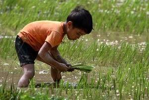 Kinderarbeit ist weit verbreitet